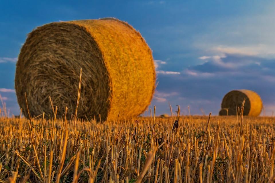 """IAP – Corso di formazione autofinanziato per """"Imprenditore agricolo Professionale"""""""""""